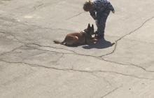Собаки — те же люди, только маленькие и покрытые шерстью.  «Диана Джессап»